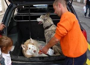 La police libère deux chiens - 300x215