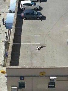chien-mort-moto-facebook