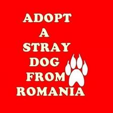Chiens Roumanie