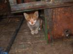 1-kranke-Katze-in-Marrakech-150x111