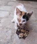 2-kranke-Katze-Marrakech-128x150