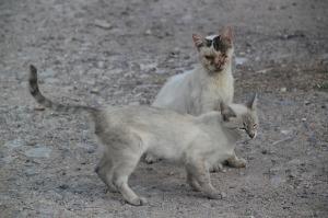 cat-655411_640