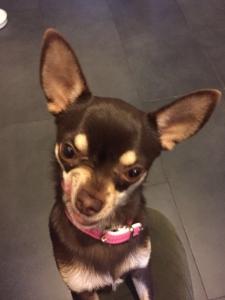 Vol Chihuahua 2
