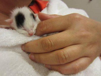une-chatte-battue-endure-les-pires-souffrances-pour-sauver-son-chaton-1