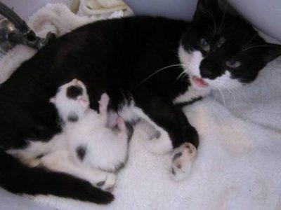 une-chatte-battue-endure-les-pires-souffrances-pour-sauver-son-chaton-2