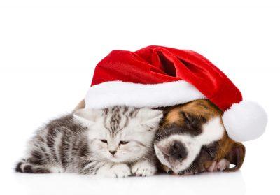 Noel et animaux